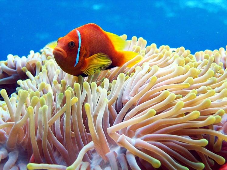 Auch die Meere sind vom Klimawandel bedroht