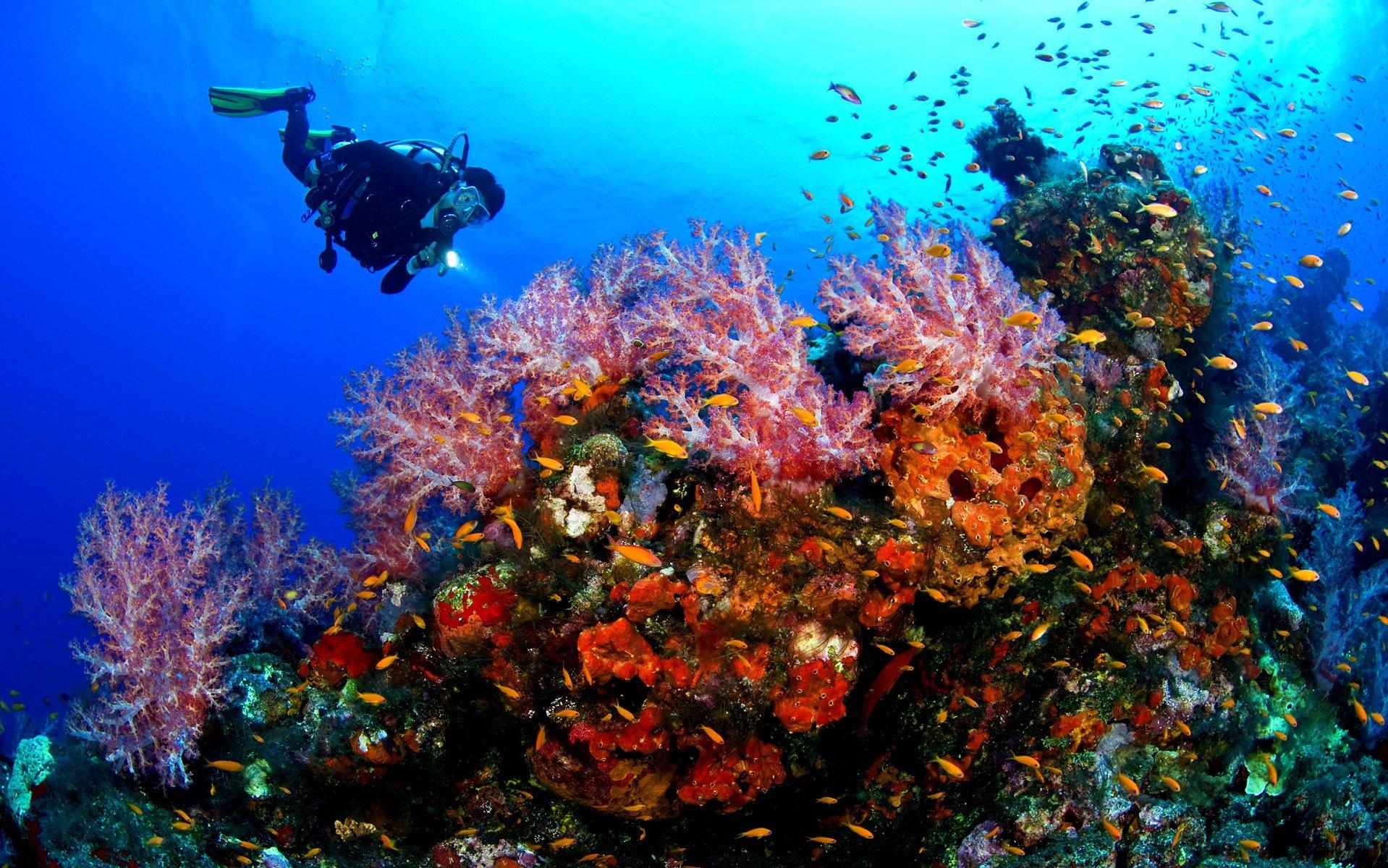 Scuba-Diving-Sabah.jpg