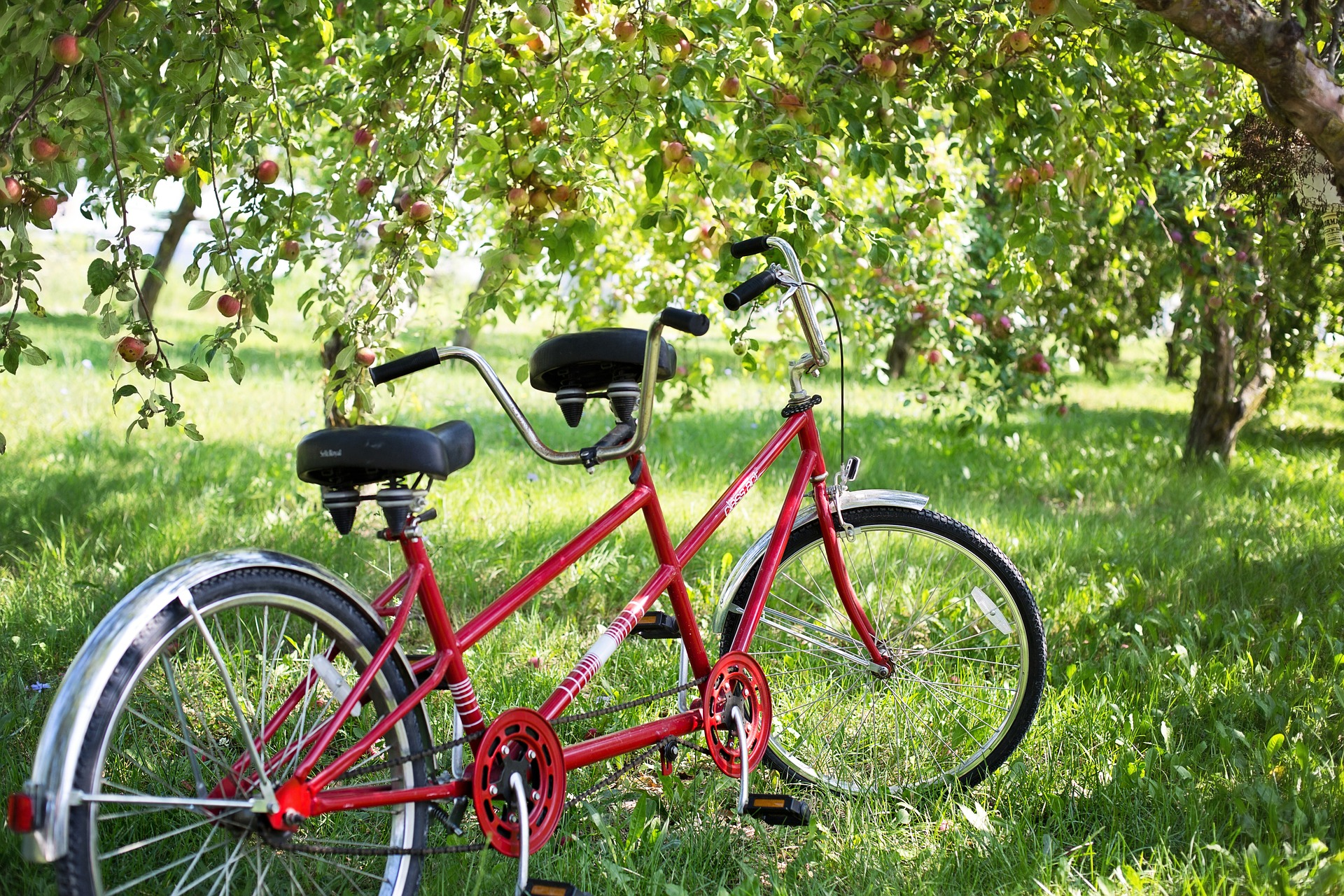 Tandem-Fahrrad in Obstwiese