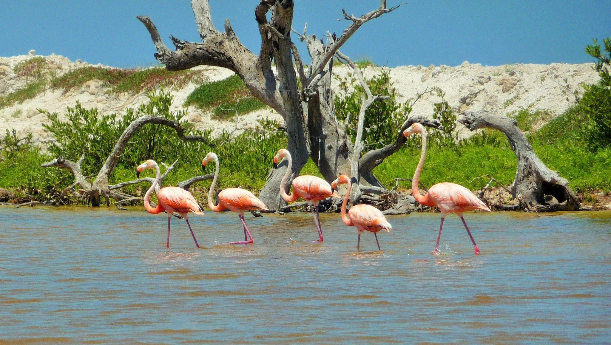 viajero mexico flamingo.jpg